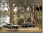 Tall Timber, Kangaroo Island - Click for a larger Image