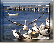 Hello from Kangaroo Island - Click for a larger Image